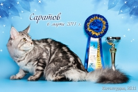 Best in Show op sex ПДШ