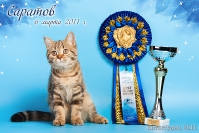 Best of Best Kitten КШ