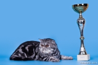 Международные Чемпионы