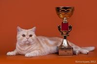Топ   Кет 9-е место BBI 2012
