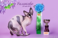 Best of Breed Regionall - BBR 2016