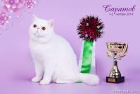 Коты Экзотическрй породы